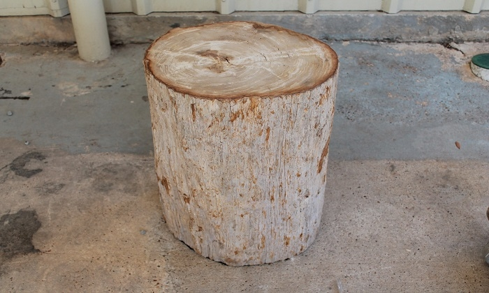 area-houston antiques & furniture - petrified wood stool / side table
