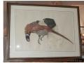 dog pheasant